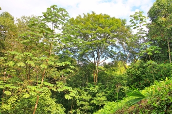 Jungle Loft View
